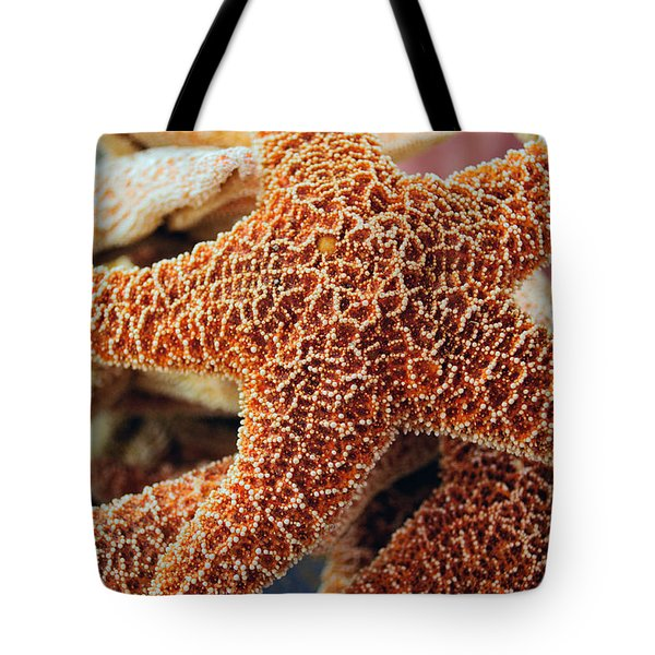 Study Of A Starfish Tote Bag by Tikvah's Hope
