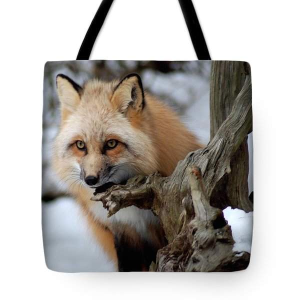 Stunning Sierra Tote Bag by Richard Bryce and Family