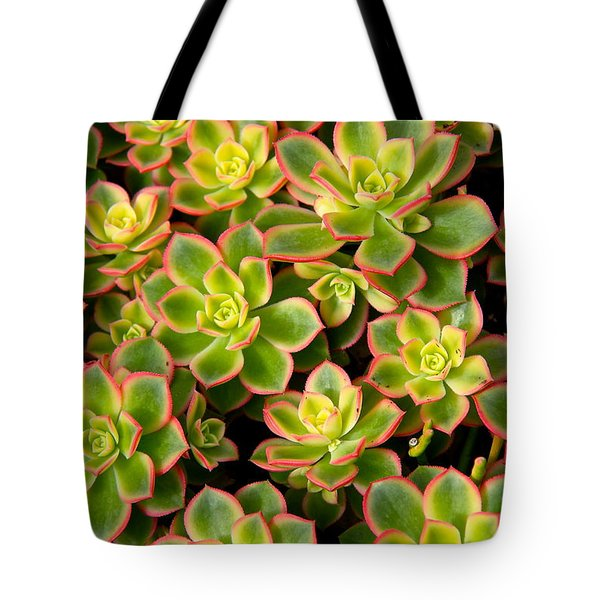 Succulent Glow Tote Bag by Suzanne Oesterling