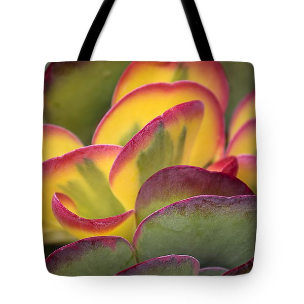 Succulent Light Tote Bag by Garry Gay