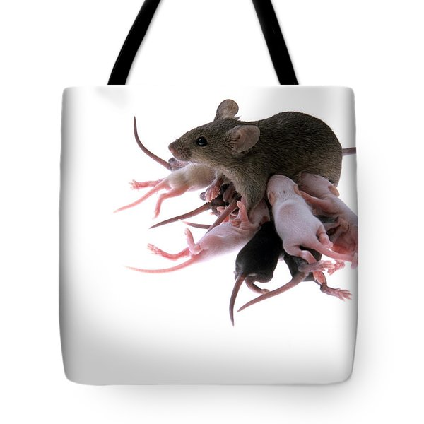 Suckling Family Of Chimeric Lab Mice Tote Bag