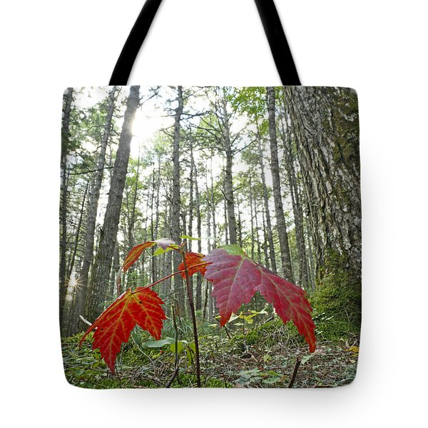 Sugar Maple In Old-growth Canadian Tote Bag