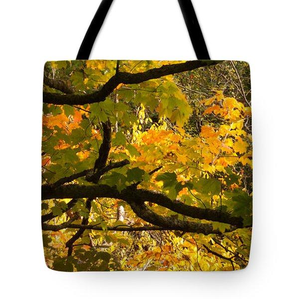 Sugar Maple Leaves  Tote Bag