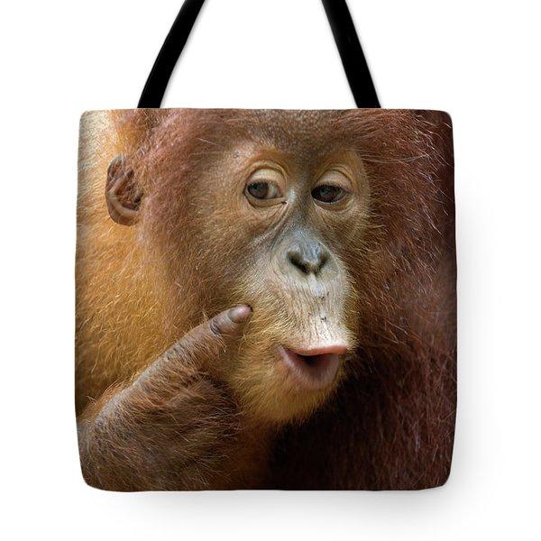Sumatran Orangutan Baby Calling Tote Bag by Suzi Eszterhas