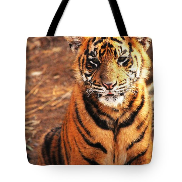 Tote Bag featuring the photograph Sumatran Tiger Cub by Olivia Hardwicke