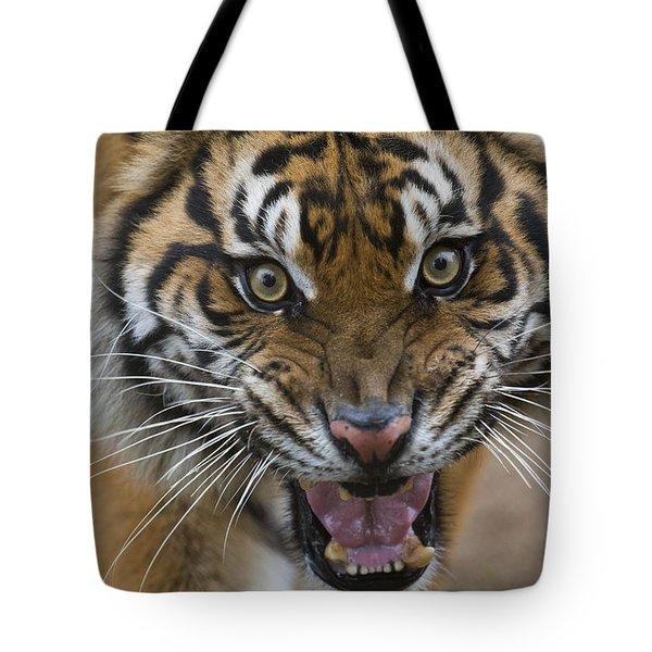 Sumatran Tiger Male Snarling Native Tote Bag