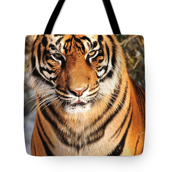 Tote Bag featuring the photograph Sumatran Tiger by Olivia Hardwicke