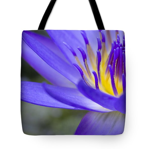 Summer Abundance Tote Bag by Priya Ghose