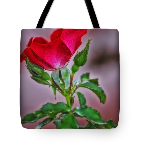 Summer Rose Tote Bag by Thomas Woolworth