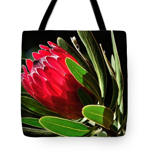 Sun-filled Protea Tote Bag by Kaye Menner