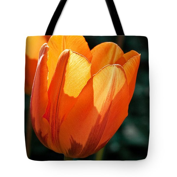 Tote Bag featuring the photograph Sun Kissed Tulip by Barbara McMahon