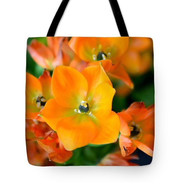 Sun Star Tote Bag by Deena Stoddard
