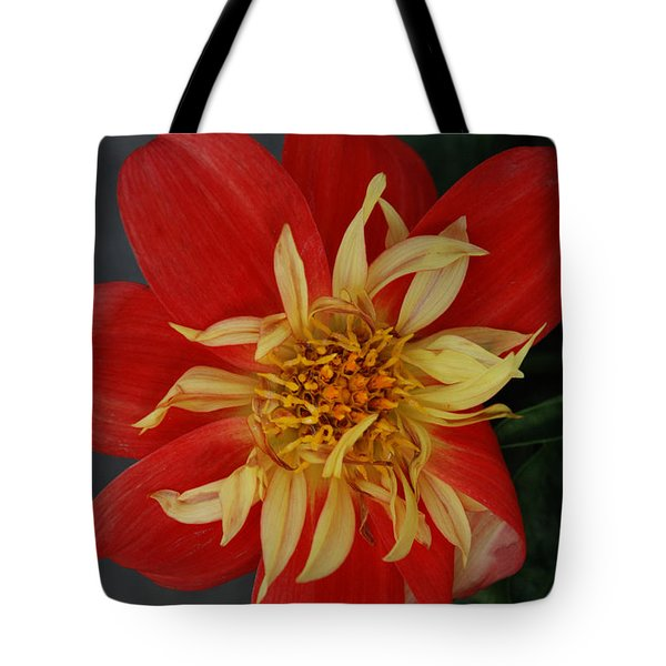 Sunburst Tote Bag by Carol  Eliassen