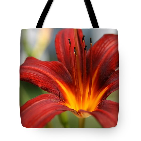 Sunburst Lily Tote Bag by Neal Eslinger