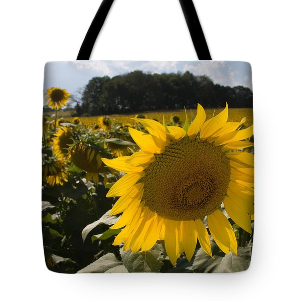 Tote Bag featuring the photograph Sunflower Field by Chris Scroggins