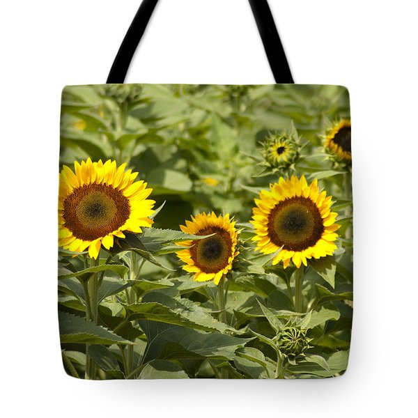 Sunflower Patch Tote Bag by Bill Cannon