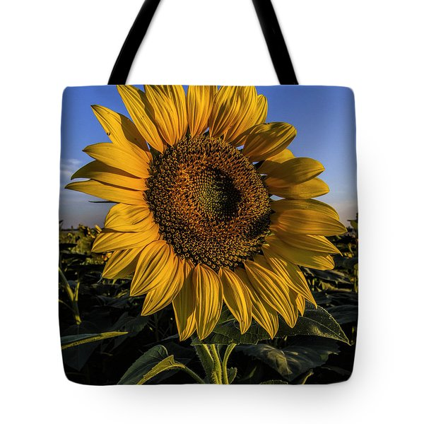 Tote Bag featuring the photograph Sunflower by Rob Graham