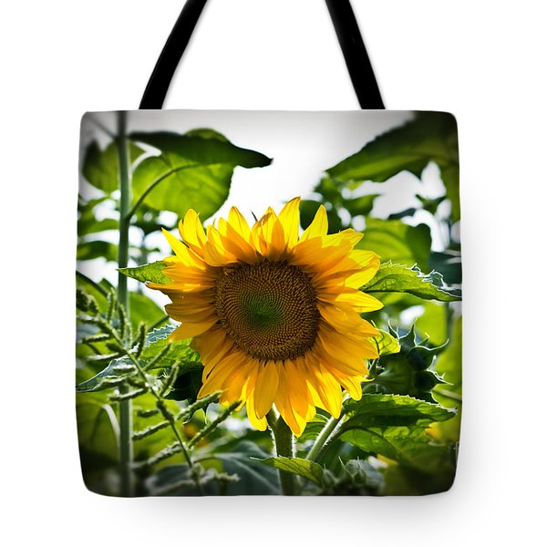 Sunflower Vignette Edges Tote Bag