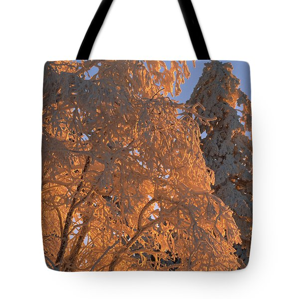Sunlight On Spruce Trees Covered Tote Bag