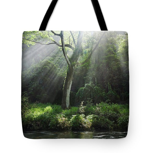 Sunlight Rays Through Trees Tote Bag by M Swiet Productions