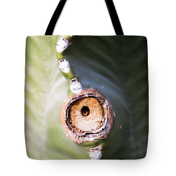 Sunlight Split On Cactus Knot Tote Bag