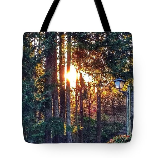 Sunlight Through Douglas Fir Trees Tote Bag by Anna Porter