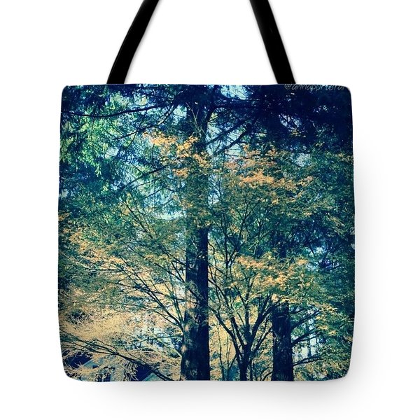 Sunlight Through Vine Maples Tote Bag