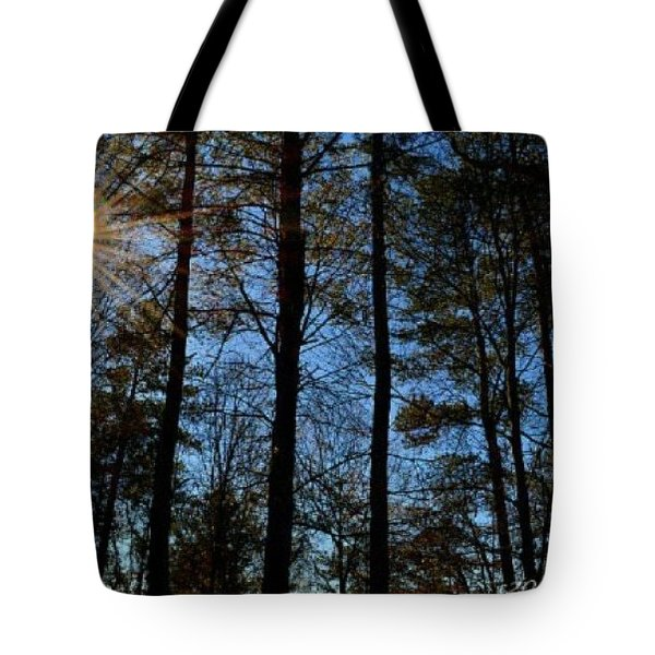 Tote Bag featuring the photograph Sunlight Through Trees by Tara Potts