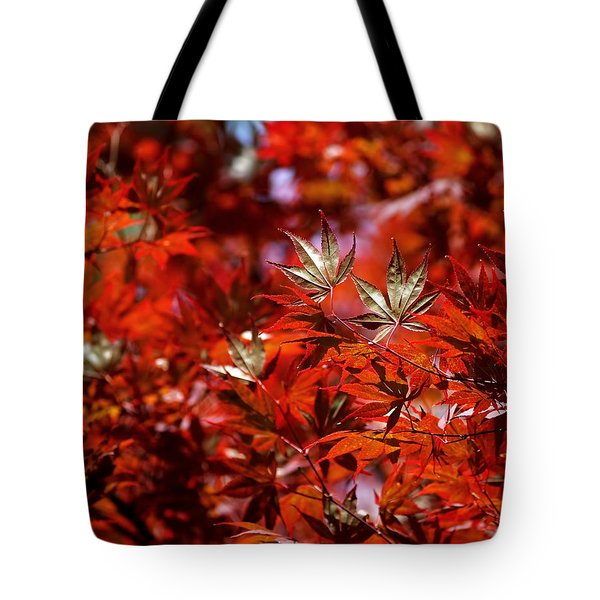 Tote Bag featuring the photograph Sunlit Japanese Maple by Rona Black