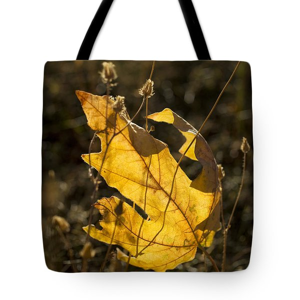 Tote Bag featuring the photograph Sunlit Maple Leaf by Charmian Vistaunet