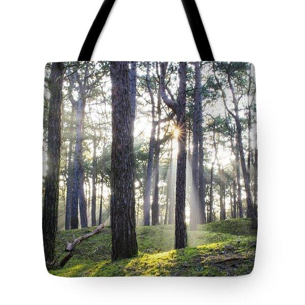 Sunlit Trees Tote Bag