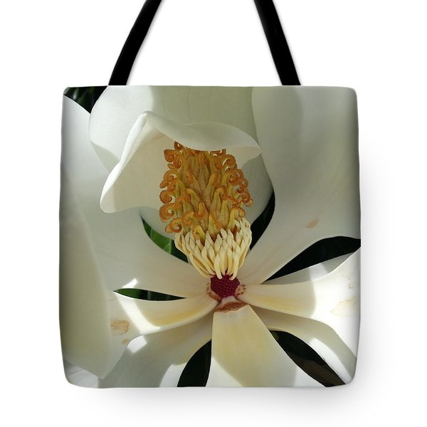 Tote Bag featuring the photograph Sunny And Shy Magnolia by Caryl J Bohn