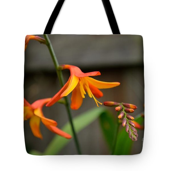 Tote Bag featuring the photograph Sunny Crocosmia by Scott Lyons