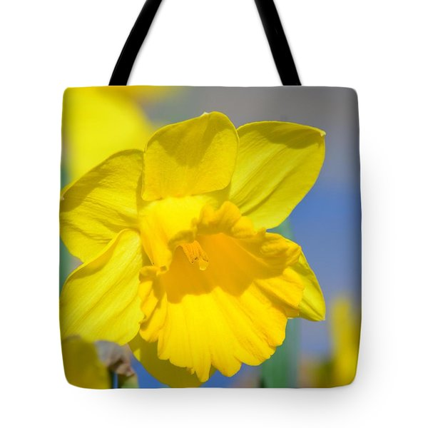 Sunny Days Of The Daffodil Tote Bag by Maria Urso