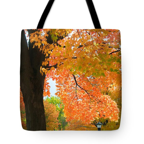 Sunny Fall Day By David Lawrence Tote Bag