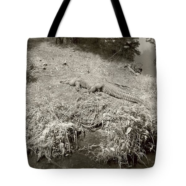 Tote Bag featuring the photograph Sunny Gator Sepia  by Joseph Baril