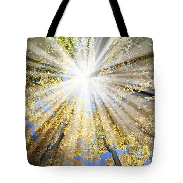 Sunrays In The Forest Tote Bag