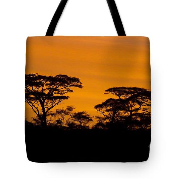 Sunrise Acacias  Tote Bag