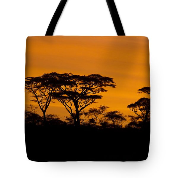 Tote Bag featuring the photograph Sunrise Acacias  by Chris Scroggins