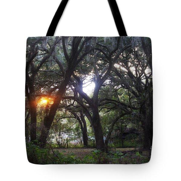 Sunrise Through The Oaks Tote Bag