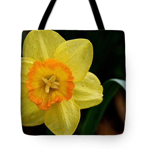 Sun's Halo Tote Bag by Susan Herber