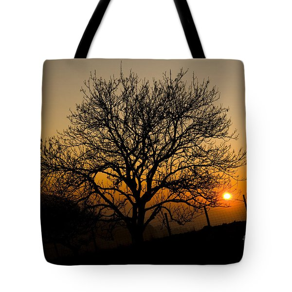Sunset Tree Tote Bag by Anne Gilbert