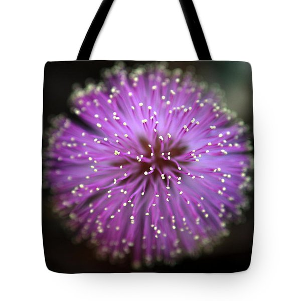Tote Bag featuring the photograph Sunshine Mimosa by Greg Allore