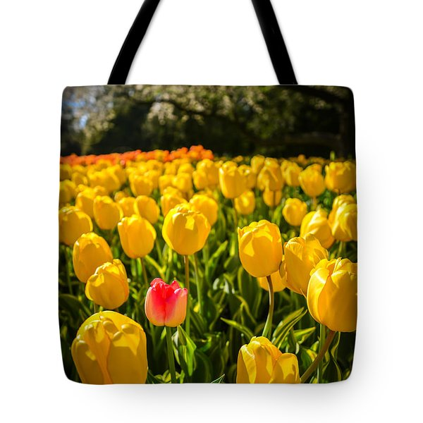 Surrounded Tote Bag