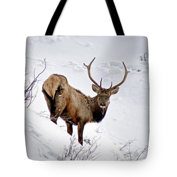 Tote Bag featuring the photograph Surviving by Jeremy Rhoades