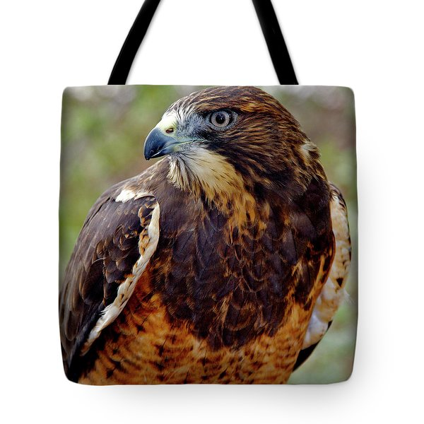 Swainson's Hawk Tote Bag by Ed  Riche