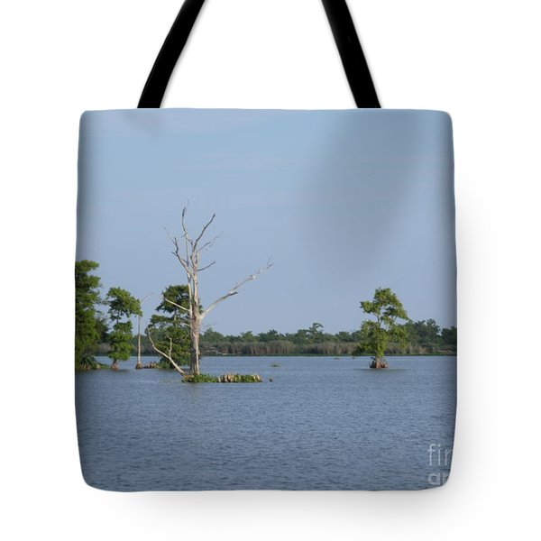 Tote Bag featuring the photograph Swamp Cypress Trees by Joseph Baril