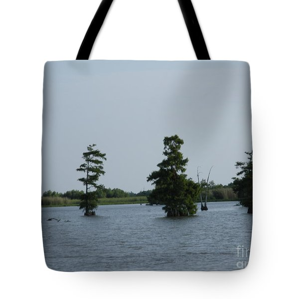 Tote Bag featuring the photograph Swamp Tall Cypress Trees  by Joseph Baril