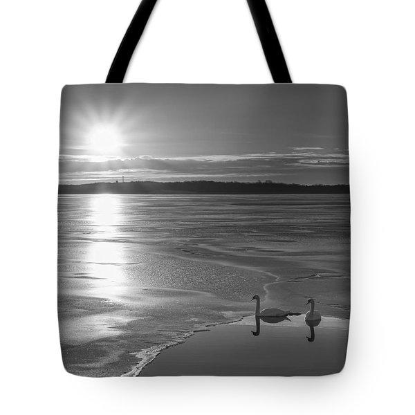 Swans Sunrise Bw Tote Bag