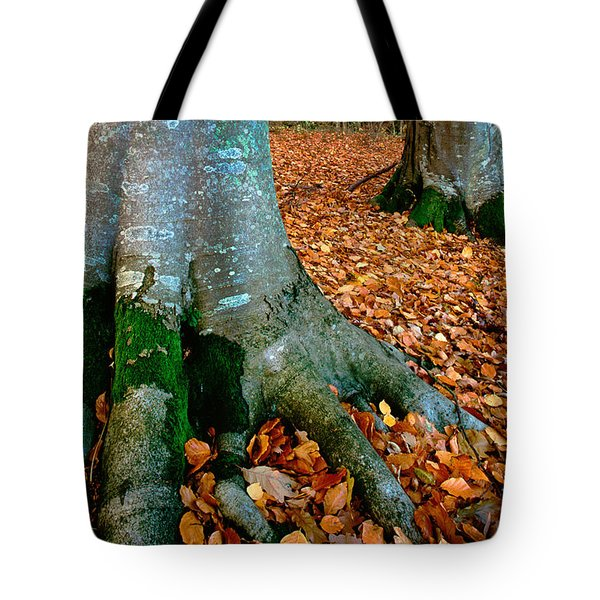 Swedish Beech Forest Tote Bag